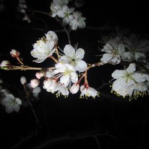 flower-in-infinity